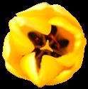 flower009