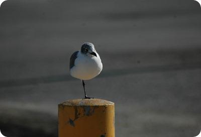 GalvestonIsland 005