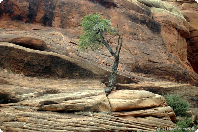 CanyonlandsNeedles_2625