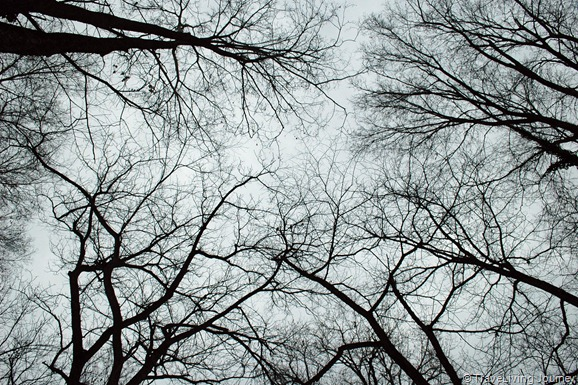 Branches maze in a winter sky