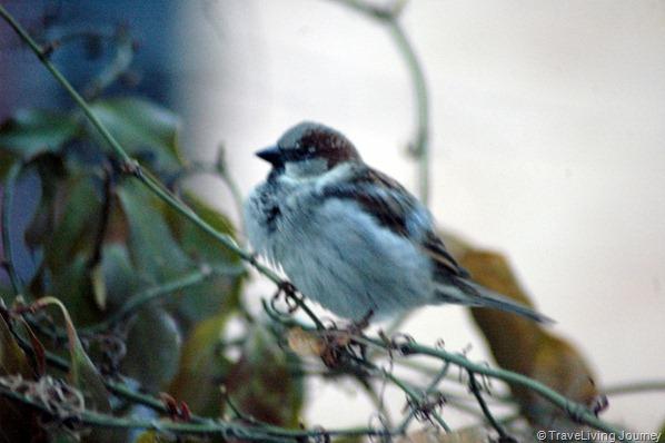 The daily bird
