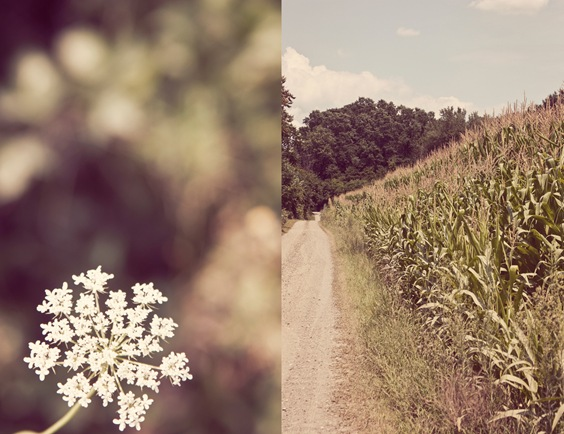 cornfielddiptych