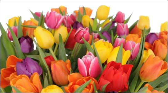 600x399_tulipaner_tcm48-37618