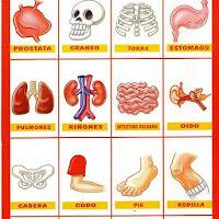cuerpo humano.jpg