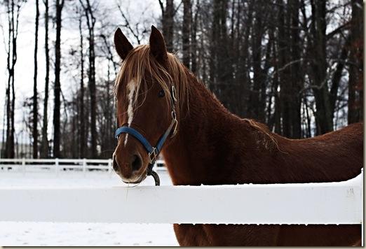Horse Snow 1