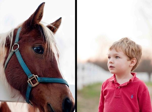 Crawford horse