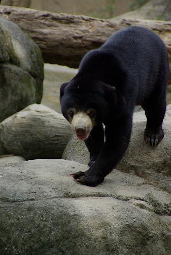 拍拍動物園