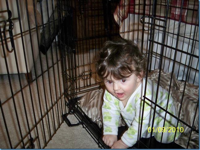 01.10 dog cage