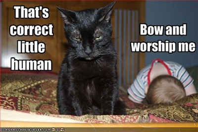 funny-pictures-cat-demands-that-baby-worship-him