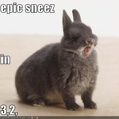 funny-pictures-rabbit-is-about-to-have-an-epic-sneeze