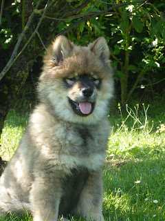le plus beau chien du monde!!!! P1030971