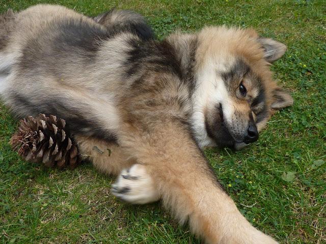 le plus beau chien du monde!!!! P1050598