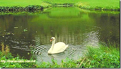 Cisne.bmp