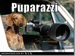 funny-dog-pictures-puparazzi
