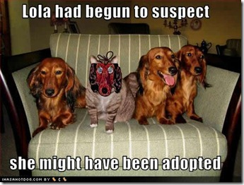 funny-dog-pictures-suspect-adopted