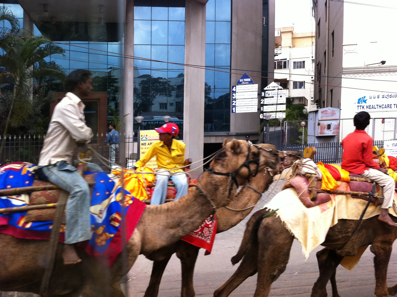 Camels in Bangalore!