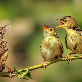 When's it my turn ? by Roy Husada - Animals Birds