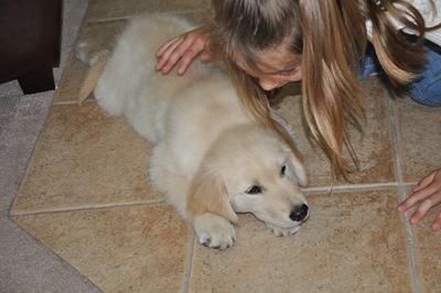 New Puppy 028