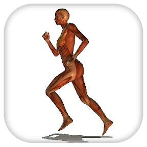 人体標本がポージング「Random Pose」 ~ iPad Creator