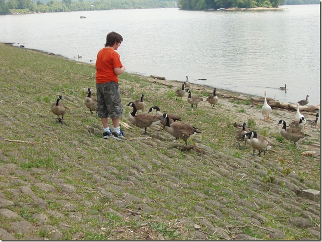 izzy and the geese one