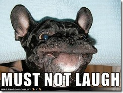 funny-dog-pictures-not-laugh
