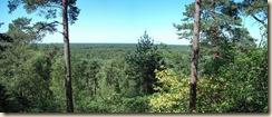 mer d'arbres Panorama (1024x433)