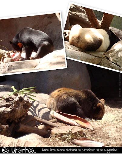 sandiegozoo2 - Passeios - San Diego Zoo