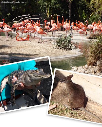 sandiegozoo5 - Passeios - San Diego Zoo