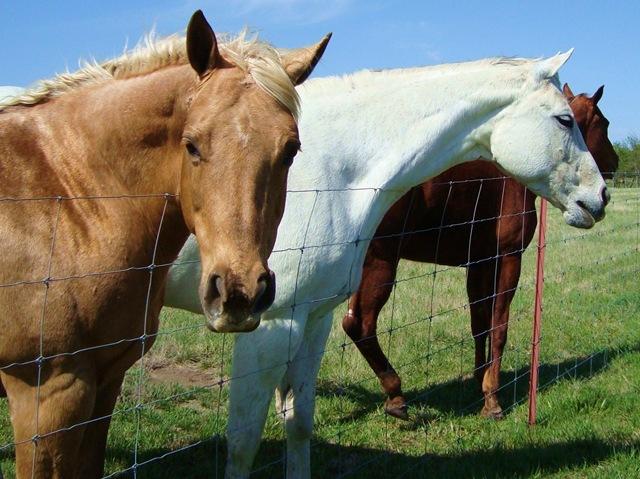 horses 024 copy