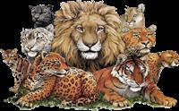 tigres misimagenesdivertidas.blogspot (4)