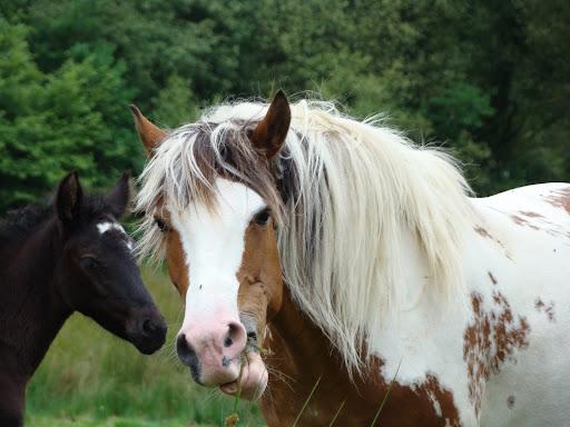 Vos plus belles grimaces de cheval et photos gag .... - Page 5 DSC06013