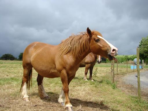 Vos plus belles grimaces de cheval et photos gag .... - Page 5 DSC05977