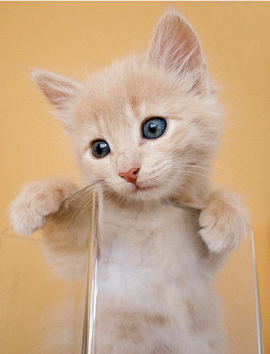 cute ginger kitten looking around sitting in a glass