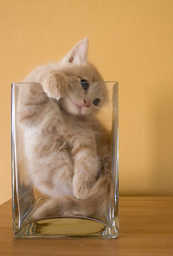 cute ginger kitten sitting in glass