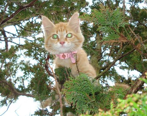 cute kitten stuck in tree emergency rescue