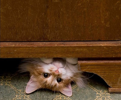 cute kitten under dresser cat pic