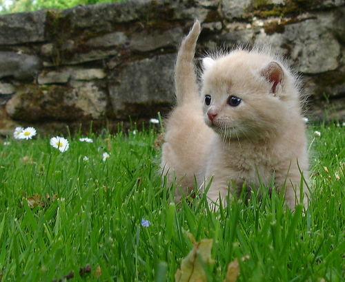 cute orange kitten outdoor grass cat pic