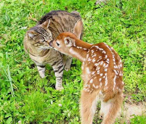cute kitty kissing deer cat pic