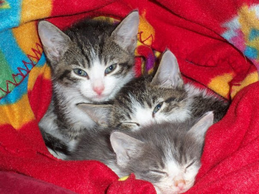 cute rescued kittens pic