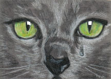 bird the cat pencil drawing