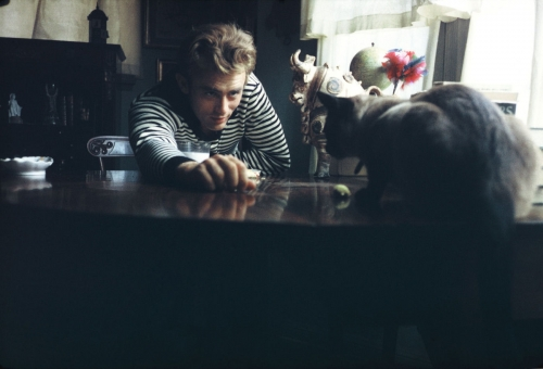 James dean celebrity and cat