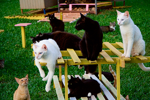 cute kitten cat sanctuary pic