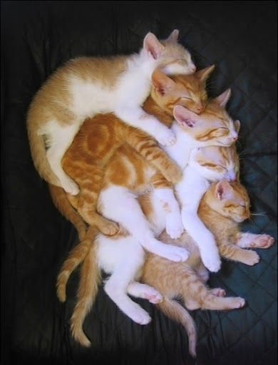 cute kittens sleeping napping cat pic