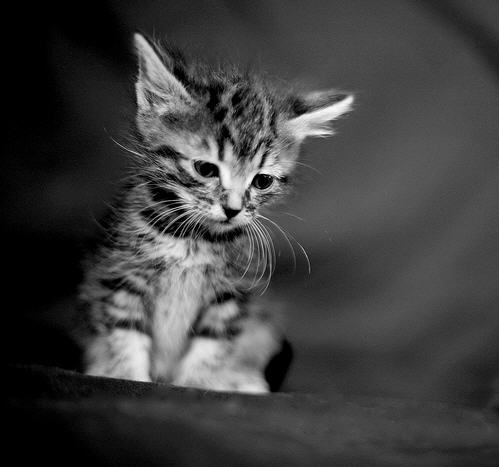 cute kitten cat pic