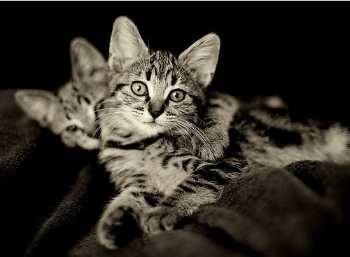 cute kittens cat pic