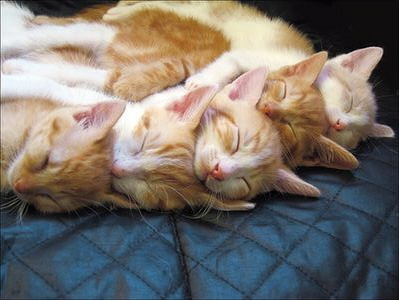 cute kittens sleeping group ap cat pic