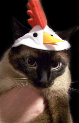 cute kitten wearing chicken hat funny silly cat pic