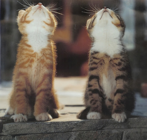 cute funny cat pic kittens looking up