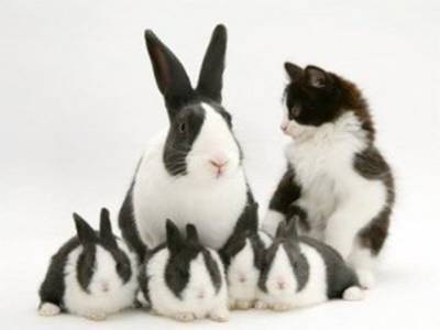bunny kitten cute look alike pic