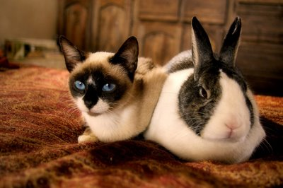 bunny kitty look alike